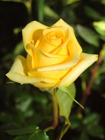Хаммер  (Yellow Hammer)